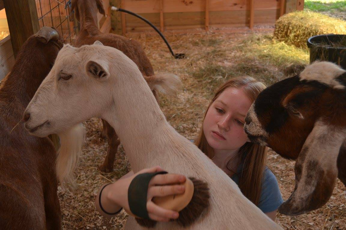 sanctuary for animals rescued camp